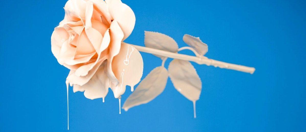 横向きのバラ