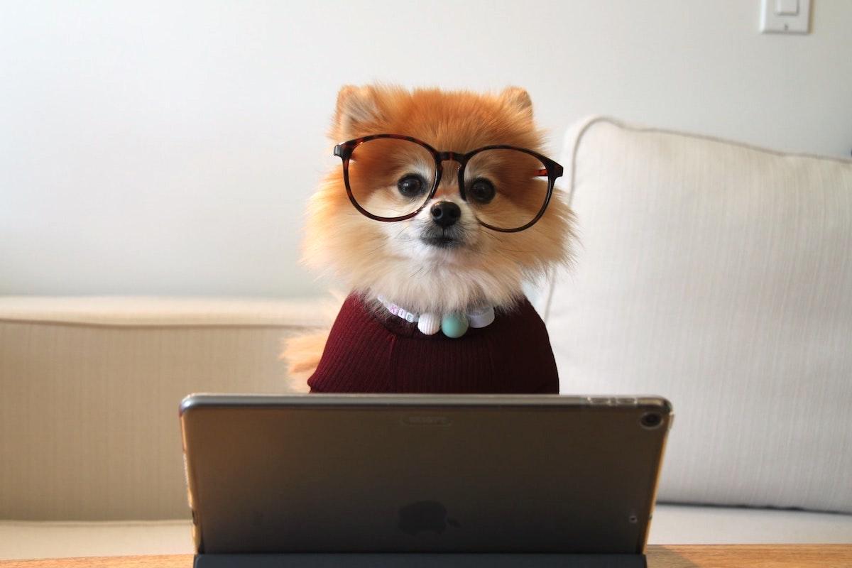 パソコンをする犬