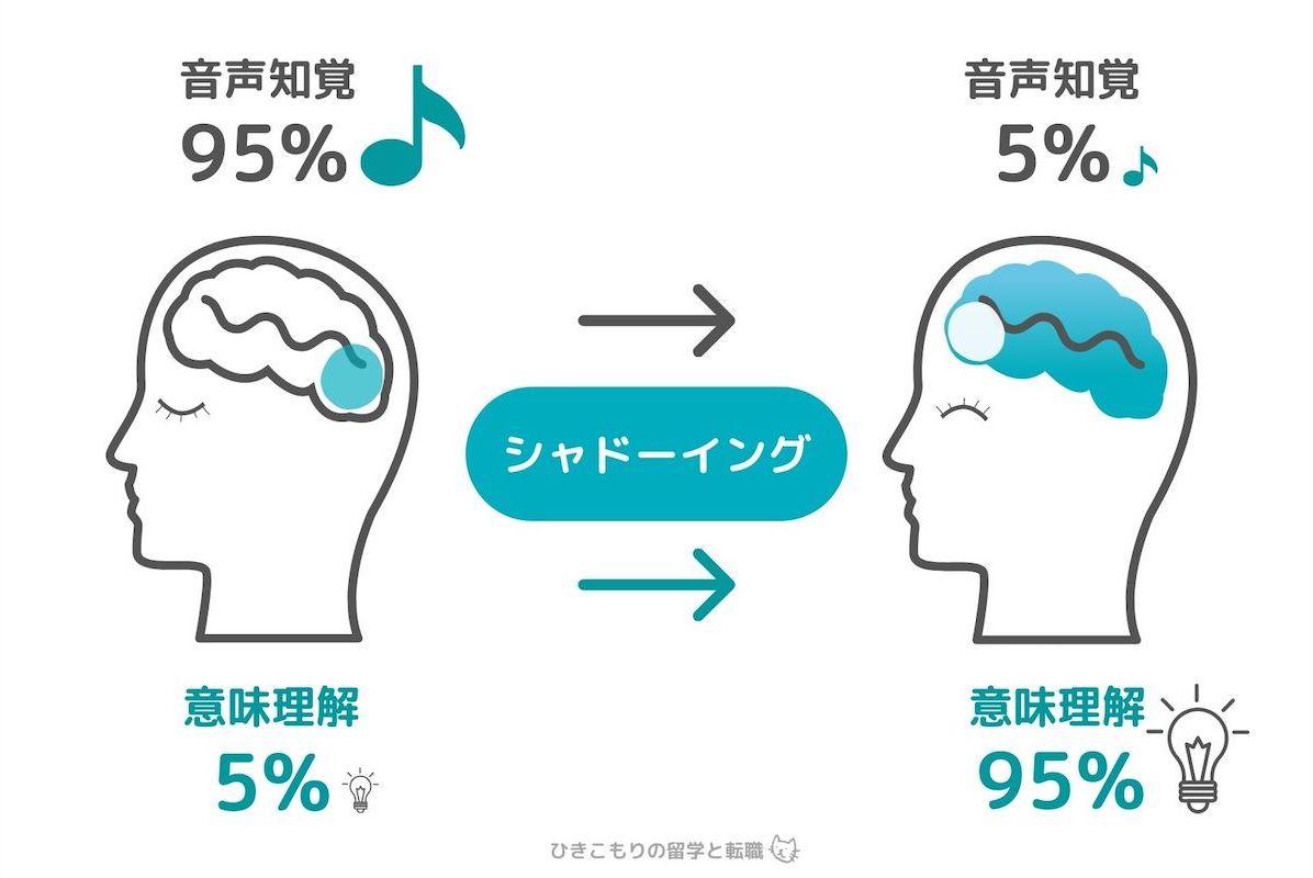 シャドーイング「音声知覚の自動化」を図解化